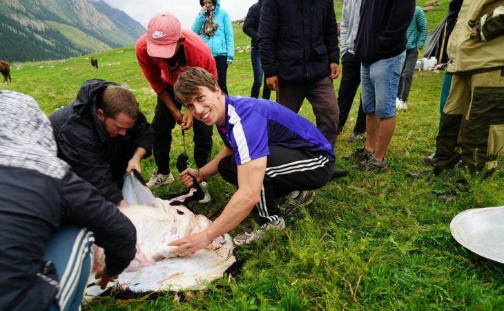 sheep kyrgyzstan