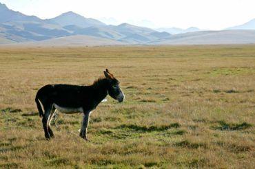 Donkey pasture Kyrgyzstan