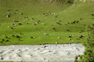 Summer pastures with milky glacier rivers