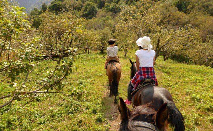 Horse Riding in Apple Fields near Almaty kazakhstan