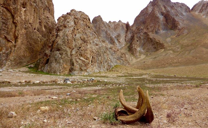 tourists can see random Marco Polo horns in Pamir mountains