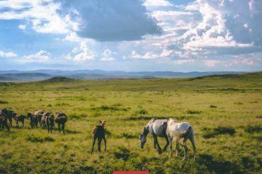 Kazakhstan steppes