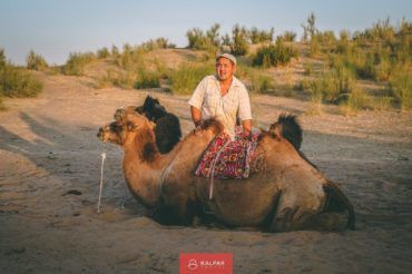 Central Asia travel camel