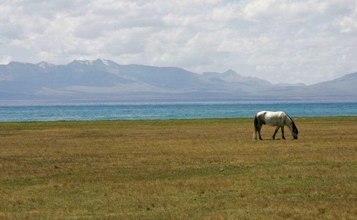 grazing white horse in Son Kul lake, Kyrgyzstan Central Asia hiking