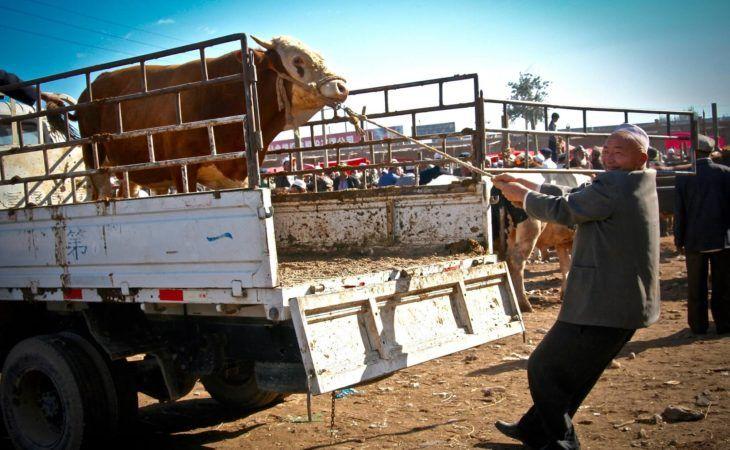 kashgar animal market auto