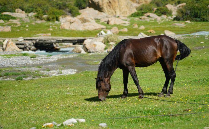 horses in kyrgyzstan tour-central asia