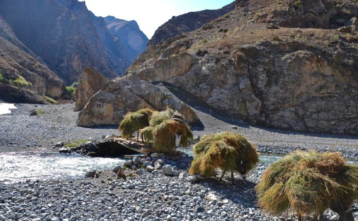 donkeys carrying grass in the Fann mountains of tajikistan, authentic ex