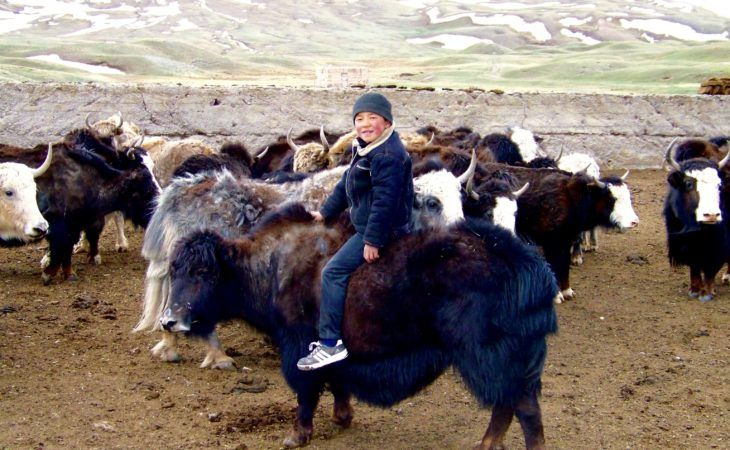 a boy sitting on the yak in Kyrgyzstan, Tajikistan border