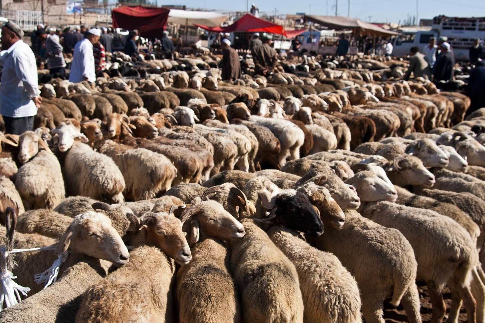 animal bazaar in kashgar