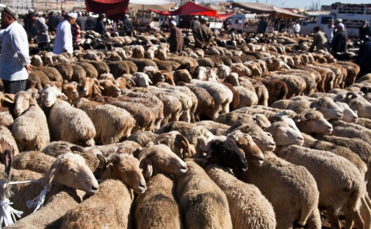 sheep in kashgar animal market. historicaly city looks like the rest of central Asia even though it is part of china.