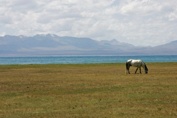 Horse in Son Kul lake during Central Asia Tour