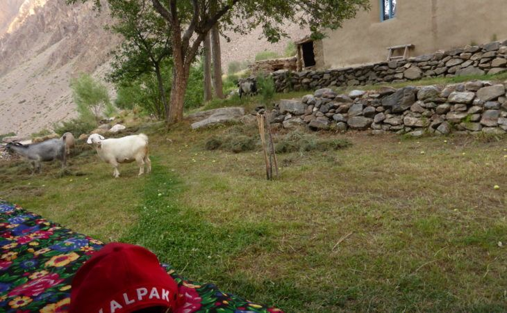 in pamir guest house garden with a goat