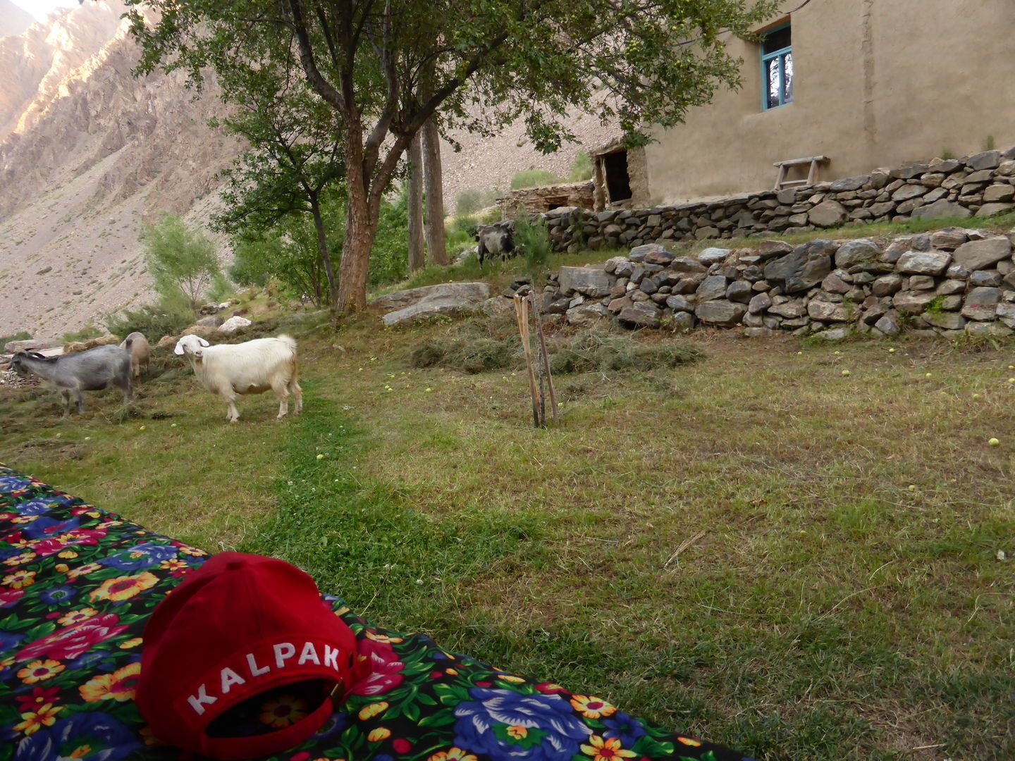 in pamirs