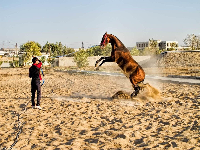 City Tour Ashgabat - Akhal Teke Horse Turkmenistan