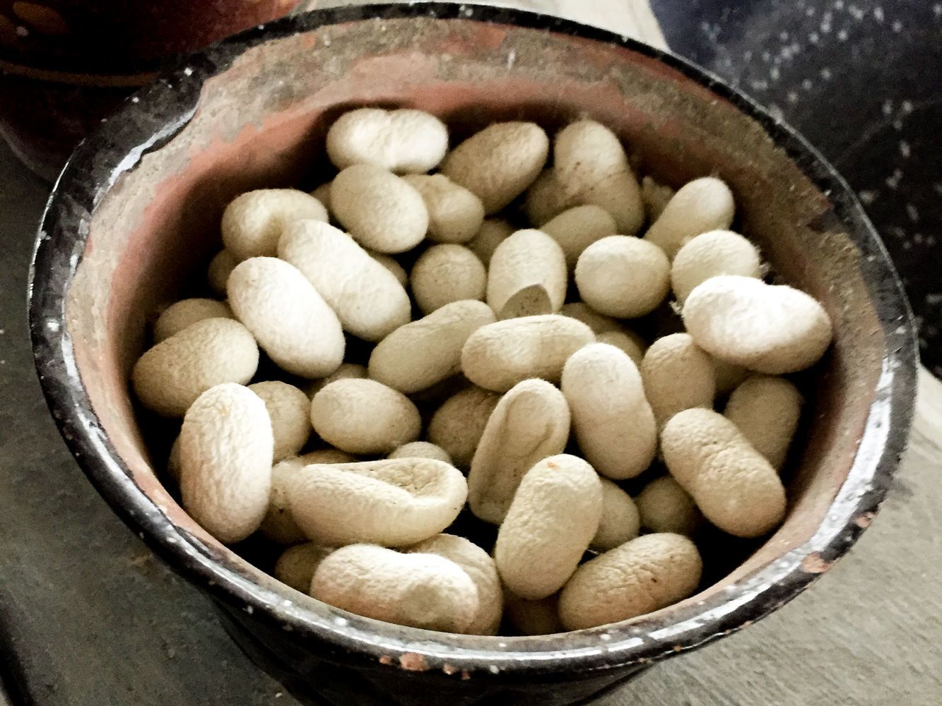 silk worms in factory of samarkand
