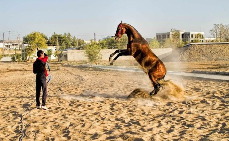 Turkmenistan Tour - Akhal Teke Horse Farm