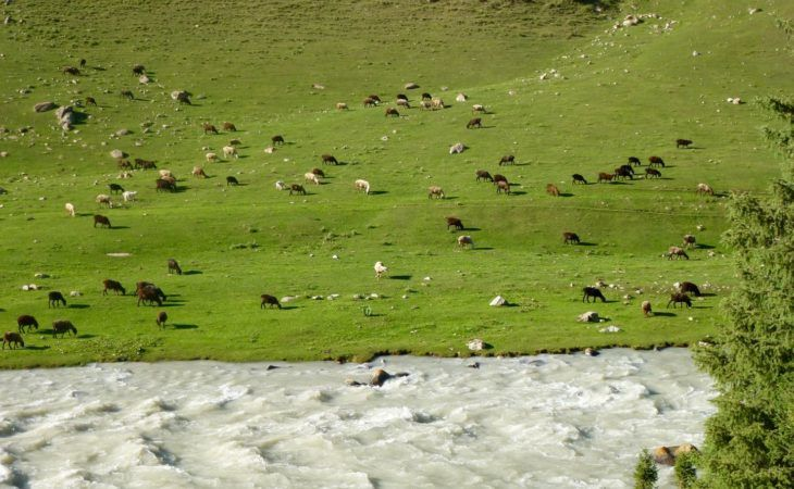 Kyrgyzstan Summer Pasture with River and Animals