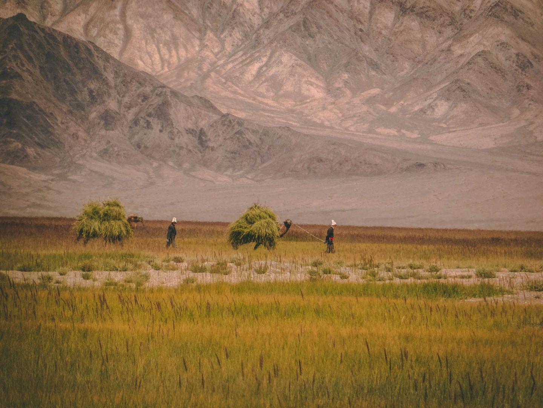 Pamir Highway vegetation